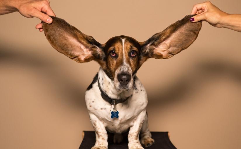 Aktives Zuhören | GesprächsFührung